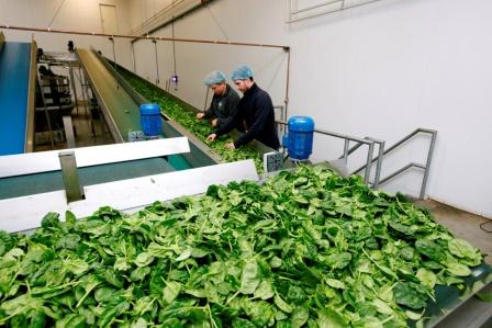 Упаковщики шпината выбирают дозаторы ishida